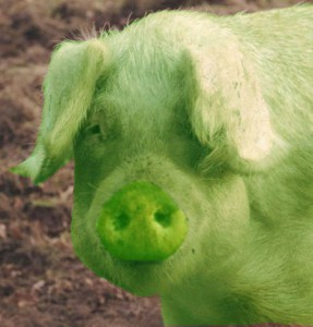 porc verde