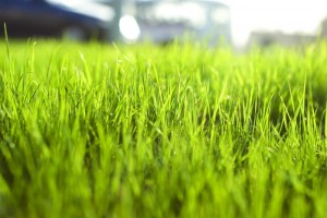 iarba lat
