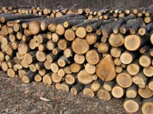 lemne taiate