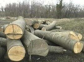 afacerile_ilegale_cu_lemne_creaza_prejudicii_statului