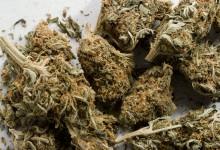 """Reţea de traficanţii de droguri, anihilată de """"Crima Organizată"""" UPDATE 1 Ce s-a găsit la percheziţii"""