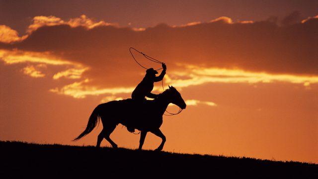 cowboy-76497