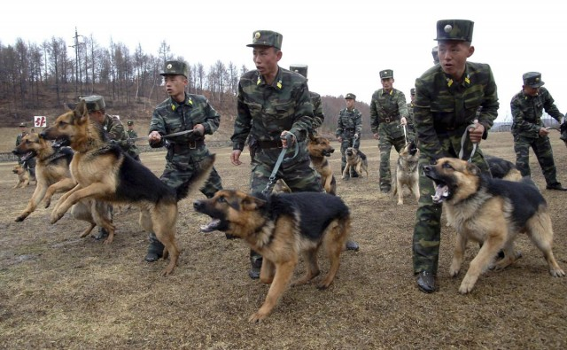 North Korean soldiers with military dogs take part in drills in an unknown location
