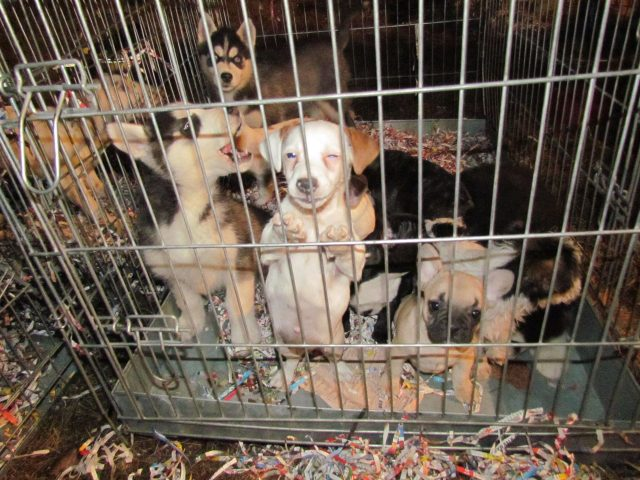 Puppy Trade  Rescue Action DE 2012