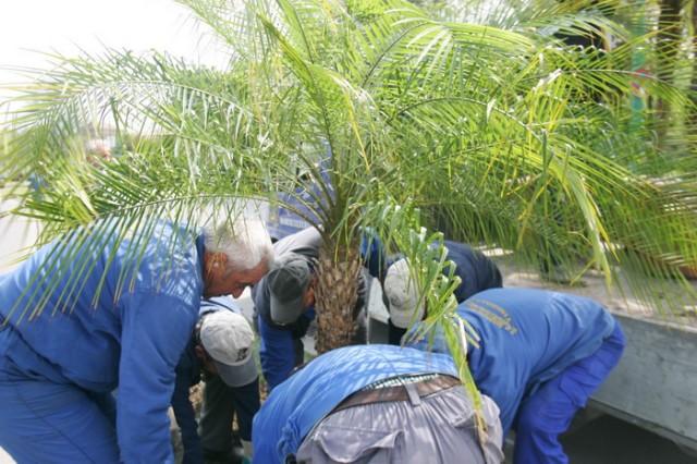 palmierii revin09_resize