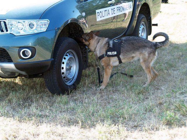 politia de frontiera caine