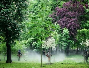 EXPLOZIV Horticultura SA dovedeşte TRUCAREA licitaţiilor pentru spaţiile verzi din Timişoara. Administraţia Robu a cumpărat bănci de fier forjat de la firma de partid Rogera cu… 15 lei UPDATE Reacția nervoasă a primarului