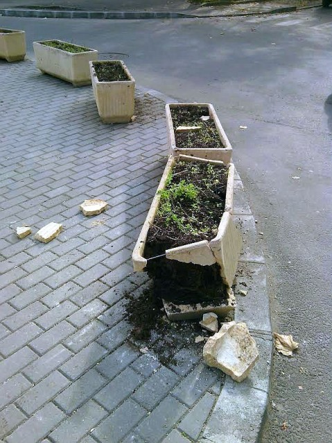 jardiniere noiembrie