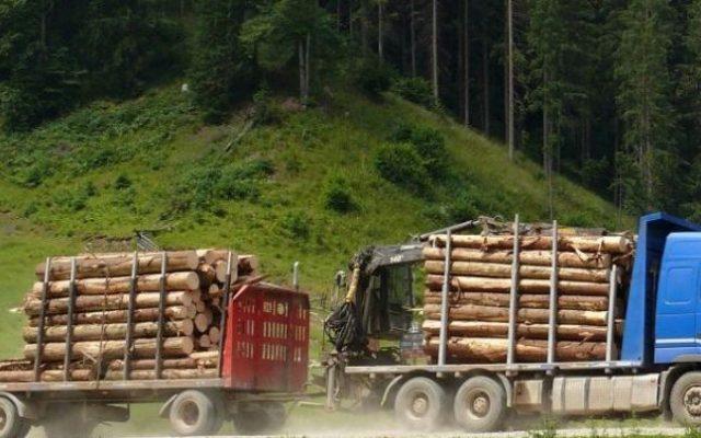 masini lemne 646x404