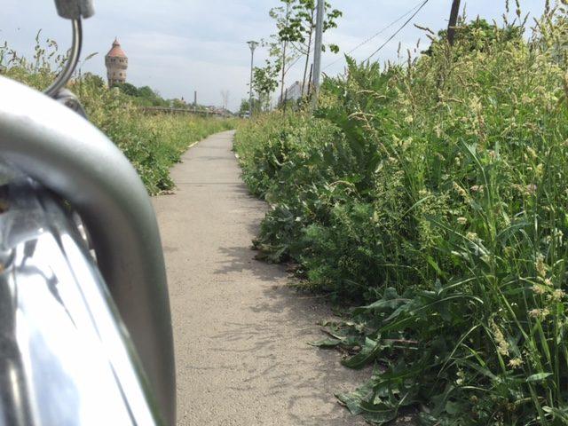 buruieni pista biciclete (7)