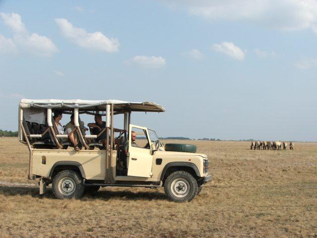 Puszta Szafari-Hortobagy