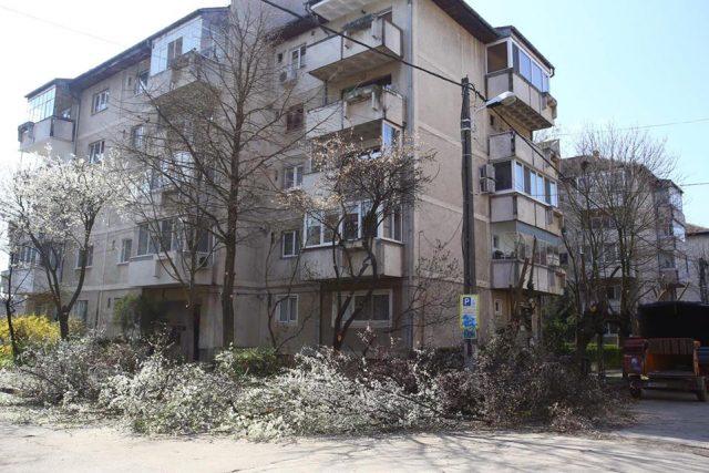 arbori taiati7