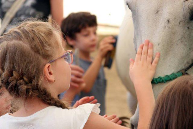 terapia cu cai