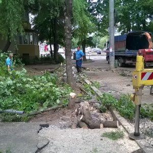 strada astrilor copaci taiati timisoara defrisare
