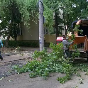 strada astrilor defrisare copaci taiati timisoara 3