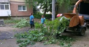 strada astrilor defrisare timisoara copaci taiati 4
