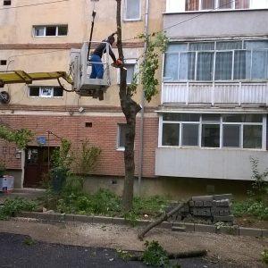 strada astrilor defrisare copaci taiati timisoara 5