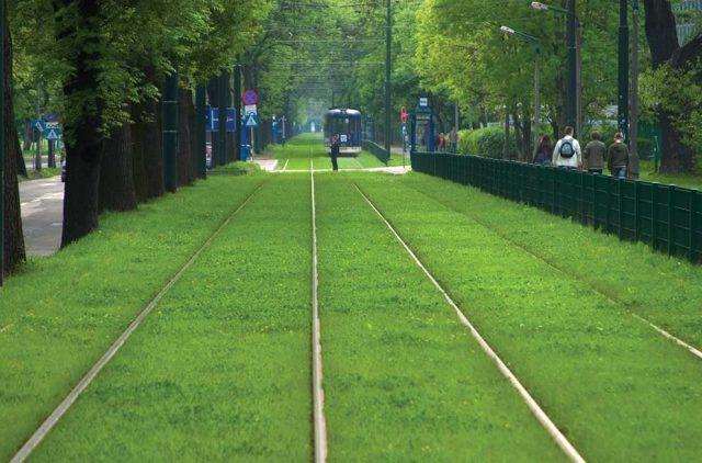 linii tramvai iarba